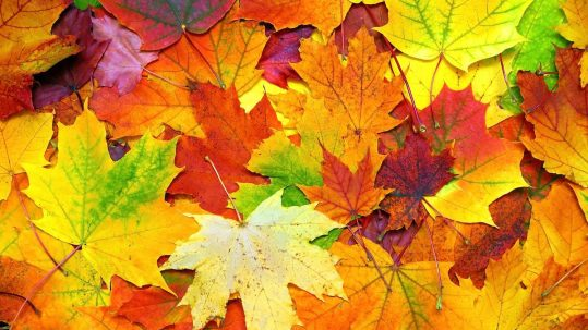 Leaves reflect the change from summer to fall. This can also bring seasonal dental difficulties.